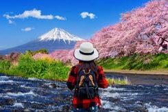 Cherry blossom i Japan
