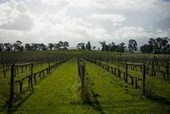 Melbourne vinodling