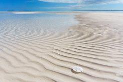 Sand dollar i Bahamas vatten