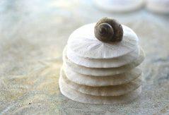 Sand dollar i sanden på Bahamas